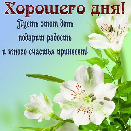 Открытка добрый день, хорошая женщина и хорошего настроения! скачать открытку бесплатно | 123ot