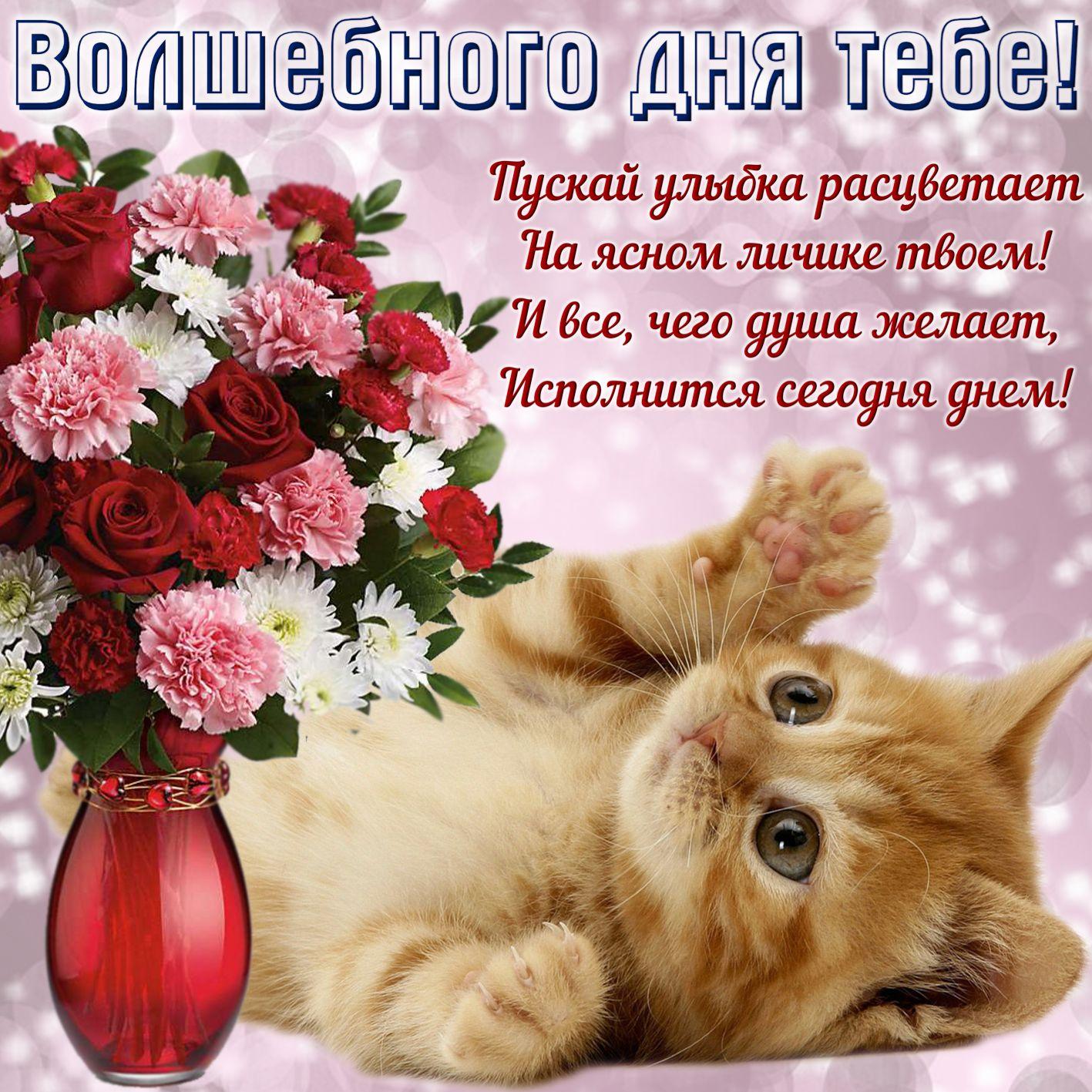 Спокойной ночи, открытки добрый день для женщины