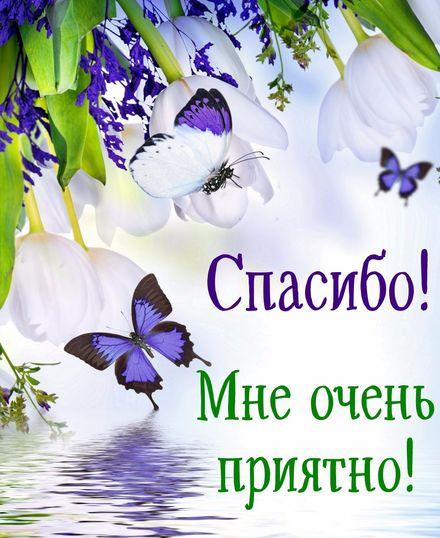 Яркая, красивая открытка спасибо и благодарю с цветами, с текстом, с пожеланием и стихом! Бабочки на красивом цветочном фоне. Скачать открытку на тему спасибо и благодарю с цветами бесплатно онлайн! скачать открытку бесплатно | 123ot