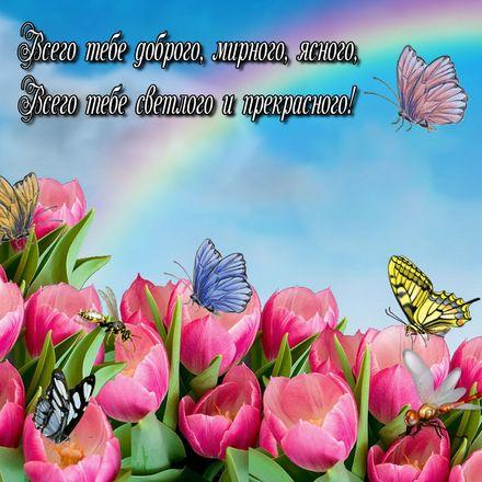 Яркая, красивая открытка с пожеланиями и стихами для любимых! Бабочки на розовых тюльпанах. Скачать открытку для самого дорогого человека бесплатно онлайн! скачать открытку бесплатно   123ot
