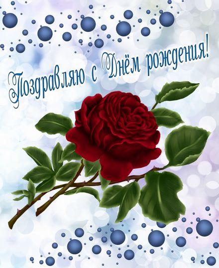 Яркая, красивая открытка с днём рождения куме с текстом, с пожеланием и стихом! Дорогоая кума, с днём рождения! Большая роза на красивом фоне. Скачать открытку на день рождения женщине бесплатно онлайн! скачать открытку бесплатно | 123ot
