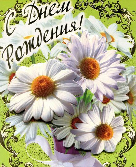 Яркая, красивая открытка с днём рождения куме с текстом, с пожеланием и стихом! Дорогоая кума, с днём рождения! Большие красивые ромашки на День рождения. Скачать открытку на день рождения женщине бесплатно онлайн! скачать открытку бесплатно | 123ot