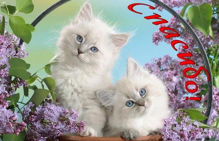 Яркая, красивая открытка спасибо и благодарю с цветами, с текстом, с пожеланием и стихом! Два котика в обрамлении из сирени. Скачать открытку на тему спасибо и благодарю с цветами бесплатно онлайн! скачать открытку бесплатно   123ot