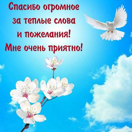 Яркая, красивая открытка спасибо и благодарю с цветами, с текстом, с пожеланием и стихом! Картинка с голубем в синем небе. Скачать открытку на тему спасибо и благодарю с цветами бесплатно онлайн! скачать открытку бесплатно | 123ot