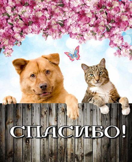 Яркая, красивая открытка спасибо и благодарю с цветами, с текстом, с пожеланием и стихом! Кот с собачкой говорят спасибо! Скачать открытку на тему спасибо и благодарю с цветами бесплатно онлайн! скачать открытку бесплатно | 123ot