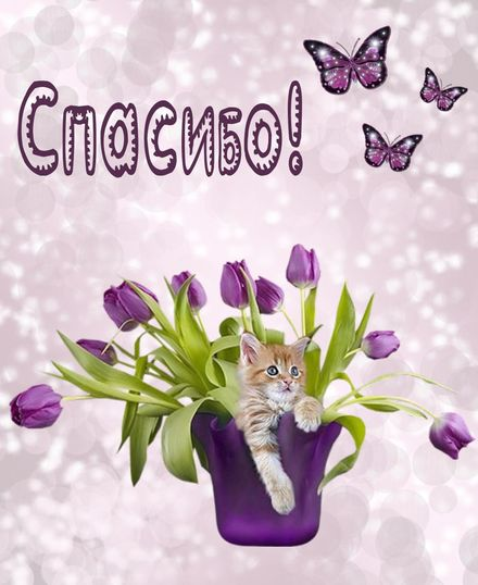 Яркая, красивая открытка спасибо и благодарю с цветами, с текстом, с пожеланием и стихом! Котик в вазе с тюльпанами. Скачать открытку на тему спасибо и благодарю с цветами бесплатно онлайн! скачать открытку бесплатно | 123ot