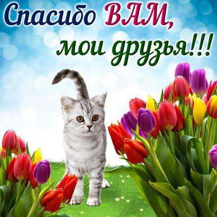 Яркая, красивая открытка спасибо и благодарю с цветами, с текстом, с пожеланием и стихом! Красивая киса на фоне тюльпанов. Скачать открытку на тему спасибо и благодарю с цветами бесплатно онлайн! скачать открытку бесплатно | 123ot