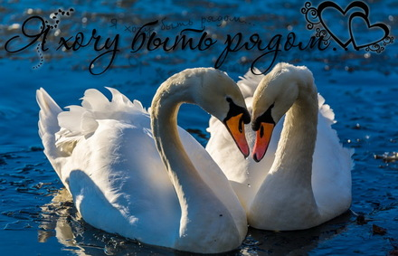 Яркая, красивая открытка с пожеланиями и стихами для любимых! Открытка, я хочу быть рядом! Лебеди на озере. Любовь. Романтика. Скачать открытку для самого дорогого человека бесплатно онлайн! скачать открытку бесплатно | 123ot