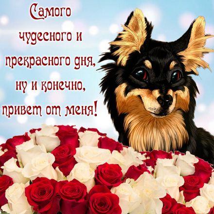 Яркая, красивая открытка с пожеланиями и стихами для любимых! Милая собачка желает чудесного дня. Скачать открытку для самого дорогого человека бесплатно онлайн! скачать открытку бесплатно | 123ot