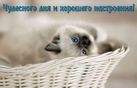 Яркая, красивая открытка с пожеланиями и стихами для любимых! Милый котик желает хорошего настроения. Скачать открытку для самого дорогого человека бесплатно онлайн! скачать открытку бесплатно   123ot