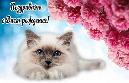 Яркая, красивая открытка с днём рождения куме с текстом, с пожеланием и стихом! Дорогоая кума, с днём рождения! Очень красивый котик на фоне цветов. Скачать открытку на день рождения женщине бесплатно онлайн! скачать открытку бесплатно   123ot