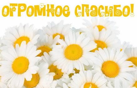 Яркая, красивая открытка спасибо и благодарю с цветами, с текстом, с пожеланием и стихом! Огромное спасибо на фоне ромашек. Скачать открытку на тему спасибо и благодарю с цветами бесплатно онлайн! скачать открытку бесплатно   123ot