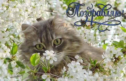 Яркая, красивая открытка с пожеланиями и стихами для любимых! Открытка, поздравляю, котик в цветах. Скачать открытку для самого дорогого человека бесплатно онлайн! скачать открытку бесплатно   123ot