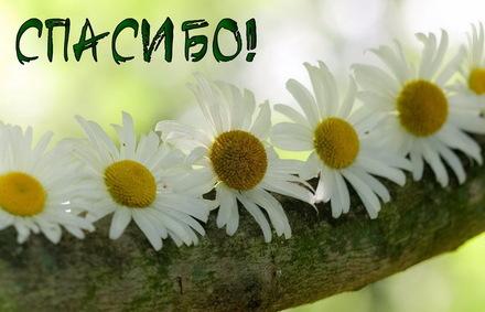 Яркая, красивая открытка спасибо и благодарю с цветами, с текстом, с пожеланием и стихом! Открытка с крупными ромашками. Скачать открытку на тему спасибо и благодарю с цветами бесплатно онлайн! скачать открытку бесплатно   123ot