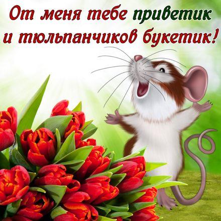 Яркая, красивая открытка привет, приветик с цветами, с текстом, с пожеланием и стихом! Открытка с мышонком и тюльпанами. Скачать открытку на тему привет, приветик с цветами бесплатно онлайн! скачать открытку бесплатно   123ot