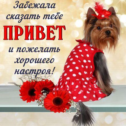 Яркая, красивая открытка привет, приветик с цветами, с текстом, с пожеланием и стихом! Пожелание и привет от собачки. Скачать открытку на тему привет, приветик с цветами бесплатно онлайн! скачать открытку бесплатно   123ot