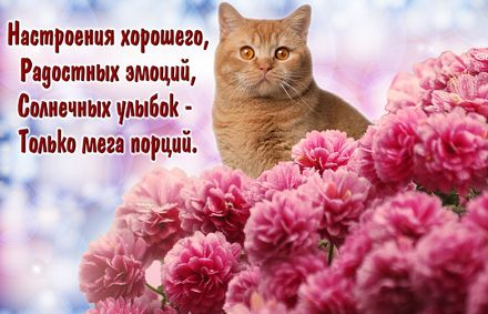 Яркая, красивая открытка с пожеланиями и стихами для любимых! Рыжий котик среди красных цветов. Скачать открытку для самого дорогого человека бесплатно онлайн! скачать открытку бесплатно   123ot