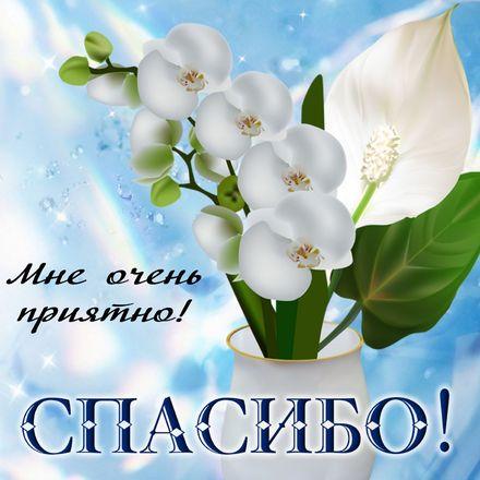 Яркая, красивая открытка спасибо и благодарю с цветами, с текстом, с пожеланием и стихом! Спасибо! и белый цветок в вазе. Скачать открытку на тему спасибо и благодарю с цветами бесплатно онлайн! скачать открытку бесплатно   123ot