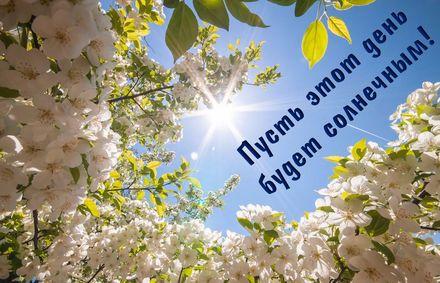 Яркая, красивая открытка с пожеланиями и стихами для любимых! Весенние деревья на фоне солнечного неба. Скачать открытку для самого дорогого человека бесплатно онлайн! скачать открытку бесплатно   123ot