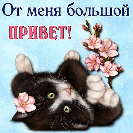 Яркая, красивая открытка привет, приветик с цветами, с текстом, с пожеланием и стихом! Забавный котик шлет привет. Скачать открытку на тему привет, приветик с цветами бесплатно онлайн! скачать открытку бесплатно | 123ot