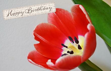 Яркая, красивая открытка с днём рождения племяннице с текстом, с пожеланием и стихом! Дорогоая племяшка, с днём рождения! Happy Birthday, красный мак. Скачать открытку на день рождения девушке, девочке бесплатно онлайн! скачать открытку бесплатно | 123ot