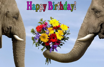 Яркая, красивая открытка с днём рождения племяннице с текстом, с пожеланием и стихом! Дорогоая племяшка, с днём рождения! Happy Birthday, слоны с красивым букетом. Скачать открытку на день рождения девушке, девочке бесплатно онлайн! скачать открытку бесплатно   123ot