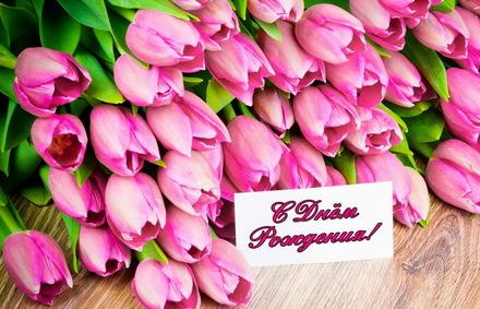 Яркая, красивая открытка с днём рождения племяннице с текстом, с пожеланием и стихом! Дорогоая племяшка, с днём рождения! Открытка женщине, красивые розовые тюльпаны. Скачать открытку на день рождения девушке, девочке бесплатно онлайн! скачать открытку бесплатно   123ot
