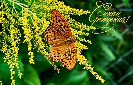 Яркая, красивая открытка с днём рождения любимой жене с текстом, с пожеланием и стихом! Дорогоая женушка, с днём рождения! Открытка с Днем Рождения, бабочка, цветы. Скачать открытку на день рождения жене, любимой женщине бесплатно онлайн! скачать открытку бесплатно | 123ot