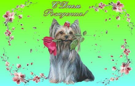 Яркая, красивая открытка с днём рождения любимой жене с текстом, с пожеланием и стихом! Дорогоая женушка, с днём рождения! Открытка с Днем Рождения, собачка с цветком. Скачать открытку на день рождения жене, любимой женщине бесплатно онлайн! скачать открытку бесплатно   123ot