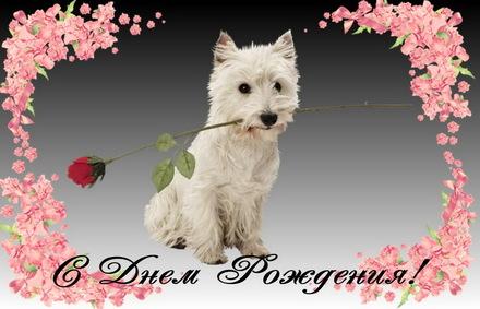 Яркая, красивая открытка с днём рождения любимой жене с текстом, с пожеланием и стихом! Дорогоая женушка, с днём рождения! Поздравляю, собачка с цветком. Скачать открытку на день рождения жене, любимой женщине бесплатно онлайн! скачать открытку бесплатно | 123ot