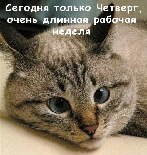 Завтра четверг открытка, котенок
