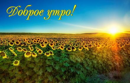 Яркая, красивая открытка с добрым утром, подруга, подружка! Голубое небо над полем подсолнухов. Скачать бесплатно онлайн! скачать открытку бесплатно   123ot
