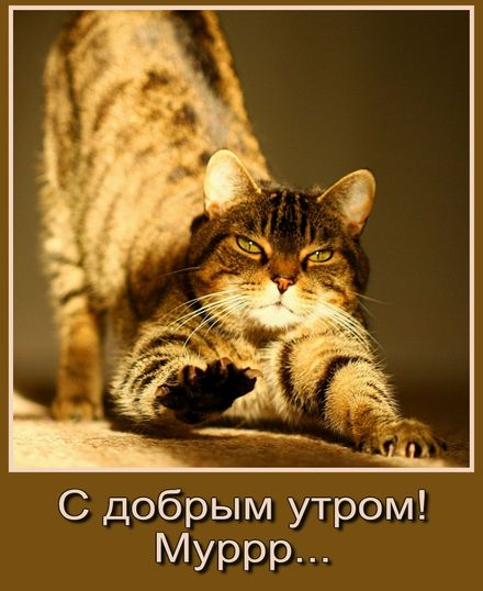 Яркая, красивая открытка с добрым утром, подруга, подружка! Котик желает доброго утра. Скачать бесплатно онлайн! скачать открытку бесплатно | 123ot