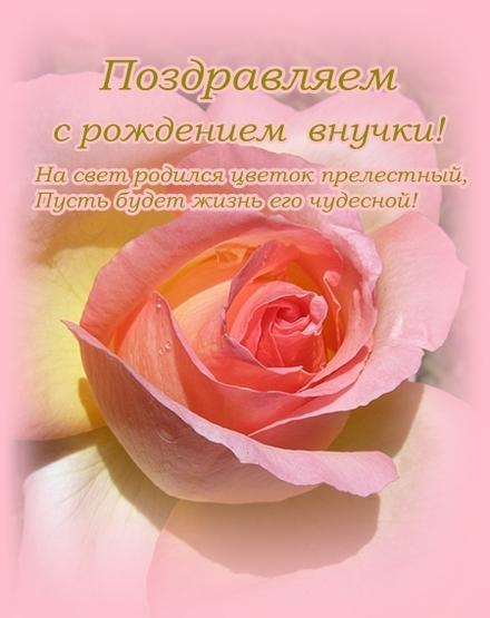 Красивая открытка с розой и поздравлением!!! Открытка поздравляем с рождением внучки! Скачать бесплатно онлайн! Роза. скачать открытку бесплатно | 123ot