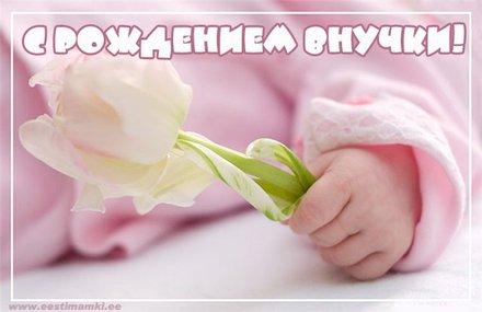 Открытка С рождением внучки!!! Открытка поздравляем с рождением внучки! Скачать бесплатно онлайн! Роза. скачать открытку бесплатно | 123ot