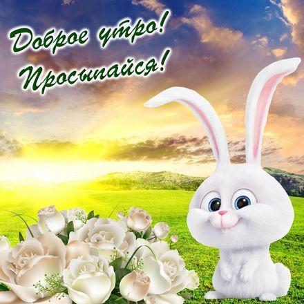 Яркая, красивая открытка с добрым утром, подруга, подружка! Открытка с весёлым кроликом и розами. Скачать бесплатно онлайн! скачать открытку бесплатно | 123ot