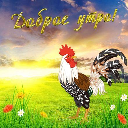 Яркая, красивая открытка с добрым утром, подруга, подружка! Петушок желает Вам доброго утра. Скачать бесплатно онлайн! скачать открытку бесплатно | 123ot