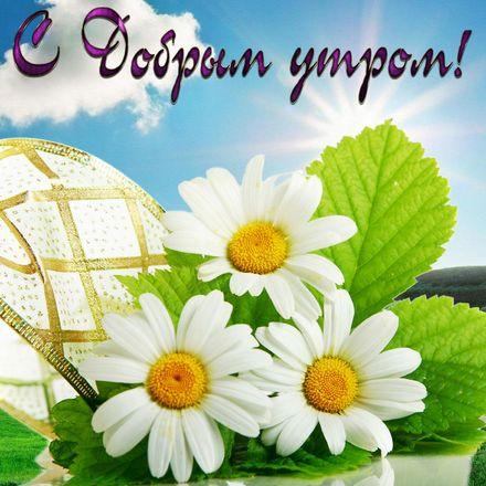 Яркая, красивая открытка с добрым утром, подруга, подружка! Ромашки на фоне голубого неба. Скачать бесплатно онлайн! скачать открытку бесплатно | 123ot
