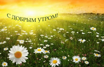 Яркая, красивая открытка с добрым утром, подруга, подружка! Ромашковое поле на рассвете. Скачать бесплатно онлайн! скачать открытку бесплатно | 123ot