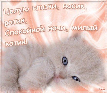 Изумительная картинка с пожеланием спокойной и доброй ночи для любимого человека! скачать открытку бесплатно   123ot
