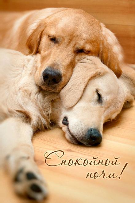 Великолепная картинка с пожеланием спокойной и доброй ночи любимому парню! скачать открытку бесплатно | 123ot