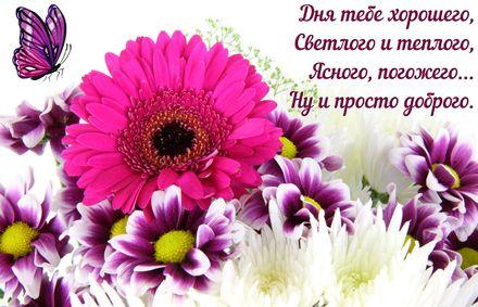 Яркая, красивая открытка хорошего дня, подруга, подружка! Дня тебе хорошего, светлого и теплого. Скачать открытку хорошего дня бесплатно онлайн! скачать открытку бесплатно | 123ot