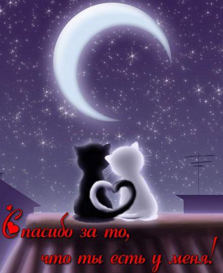 Яркая, красивая открытка для любимой, любимого! Два котика на крыше под луной. Скачать открытку на тему любовь и романтика бесплатно онлайн! скачать открытку бесплатно | 123ot