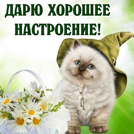 Яркая, красивая открытка хорошего настроения! Картинка с пушистым котиком в шляпе. Скачать открытку хорошего настроения бесплатно онлайн! скачать открытку бесплатно | 123ot