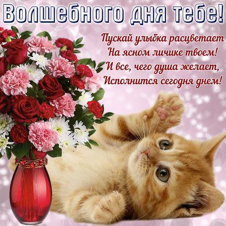 Яркая, красивая открытка хорошего дня, подруга, подружка! Котенок желает волшебного дня. Скачать открытку хорошего дня бесплатно онлайн! скачать открытку бесплатно   123ot