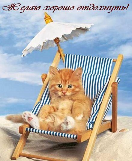 Яркая, красивая открытка на тему отпуска! Котенок в шезлонге желает хорошо отдохнуть. Скачать открытку хорошего отпуска, хорошо отдохнуть бесплатно онлайн! скачать открытку бесплатно | 123ot
