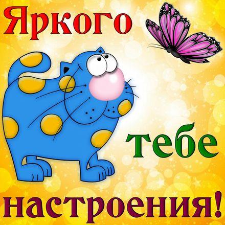 Яркая, красивая открытка хорошего настроения! Котик желает тебе яркого настроения. Скачать открытку хорошего настроения бесплатно онлайн! скачать открытку бесплатно | 123ot