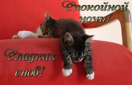 Яркая, красивая открытка спокойной ночи, сладких снов! Маленькие котята спят на красном кресле. Скачать открытку спокойной ночи бесплатно онлайн! скачать открытку бесплатно | 123ot