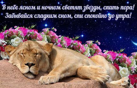 Яркая, красивая открытка спокойной ночи, сладких снов! Открытка со спящим среди цветов львёнком. Скачать открытку спокойной ночи бесплатно онлайн! скачать открытку бесплатно | 123ot