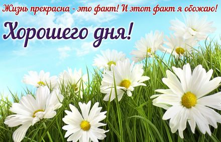 Яркая, красивая открытка хорошего дня, подруга, подружка! Ромашки и пожелание хорошего дня. Скачать открытку хорошего дня бесплатно онлайн! скачать открытку бесплатно | 123ot